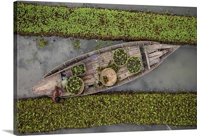 Traditional Floating Vegetable Garden, Pirojpur, Barisal, Bangladesh