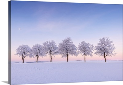 Tree-Lined Hoarfrost Trees In Morning Light, Frauenstein, Ore Mountains, Saxony, Germany