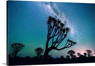 Trees At Night Under The Stars, Quiver Tree Forest, Namibia, Africa