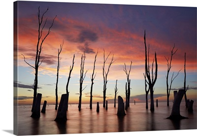 Trees Withered By High Salinity In Laguna Mar Chiquita At Twilight, Cordoba, Argentina