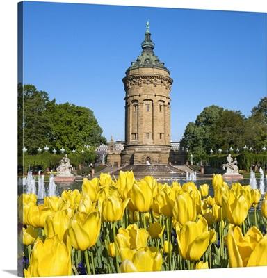 Tulips at the Mannheim Friedrichsplatz with romanesque water tower in the background