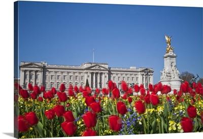 UK, London, Westminster, Tulips infront of Buckingham Palace