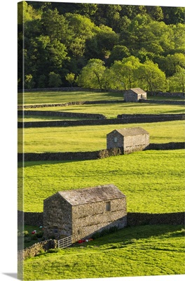 United Kingdom, England, North Yorkshire, Gunnerside. Traditional barns in Swaledale