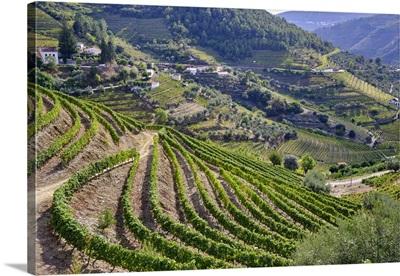 Vale De Mendiz, UNESCO World Heritage Site, Portugal
