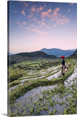 Vietnam, Sapa. Red Dao woman on rice paddies at sunrise