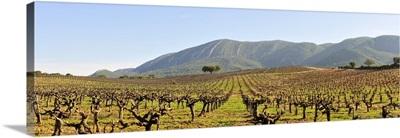 Vineyards in the Arrabida Natural Park, Portugal