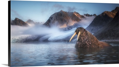 Walrus (Odobenus Rosmarus) Depicted In Northern Spitsbergen, Svalbard Islands