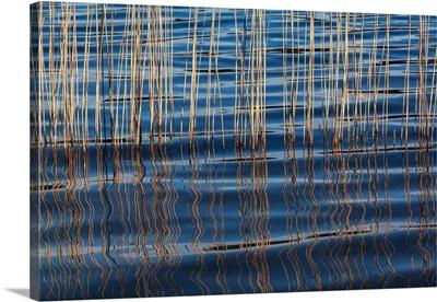 Waves Betweeen A Reed At Idroscalo Lake, Milan, Lombardy, Italy
