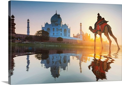 Woman Crossing The Yamuna River On A Camel Towards The Taj Mahal At Sunset, India