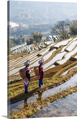 Women walking in the rice terraces, Yuanyang, Yunnan, China
