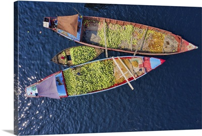 Workers Unload Watermelons From The Boats, Sadarghat, Dhaka, Bangladesh