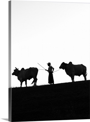 Young farmer with two oxen, Bagan, Mandalay region, Myanmar