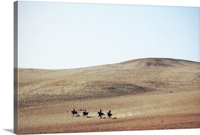 Men On Horses Cross the Desert, Giza, Egypt