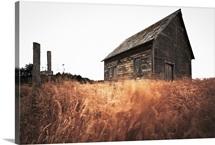 Old Barn and Field, Sonoma, California