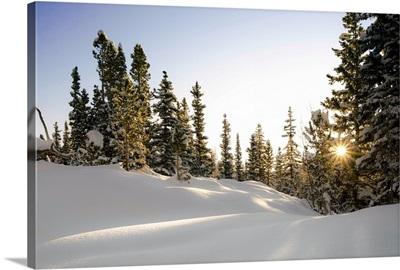 Sunrise Bursts Through the Trees, Rocky Mountain National Park