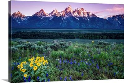 The Grand Tetons at Sunrise, Grand Teton National Park, Wyoming