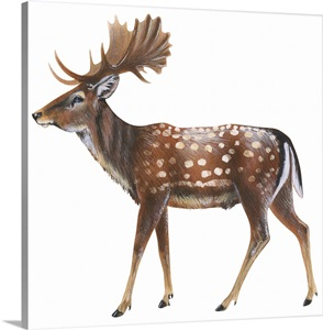 Fallow Deer Dama Dama Wall Art Canvas Prints Framed