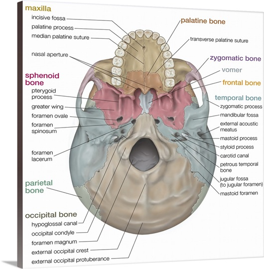 lateral skull base anatomy pdf