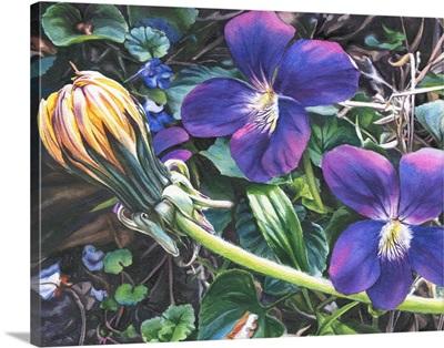 Dandelion with Violets