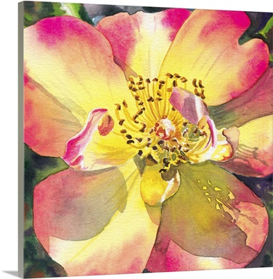 Peach Rose 6