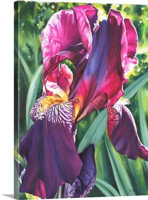 The Queen's Iris