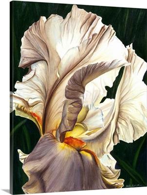 Tilted Iris