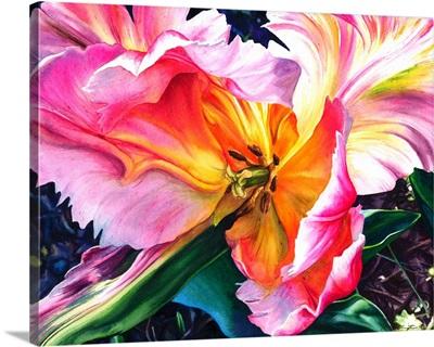 Wilting Parrot Tulip