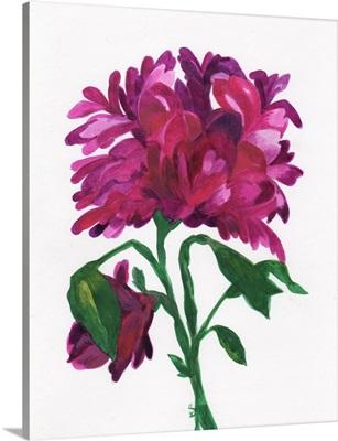 Violet Wild Zinnia