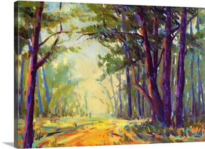Walk in the Woods 5