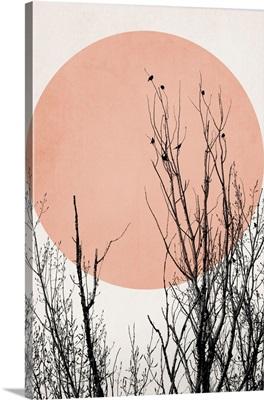 Sunset Dreams - Rose