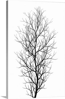The Tree - Black