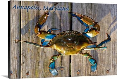 Annapolis, Maryland, Blue Crab on Dock