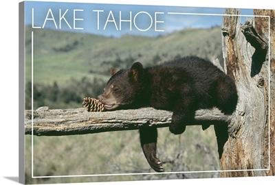 Bear Cub with Pinecone, Lake Tahoe, California