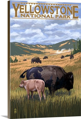 Bison and Calf Grazing, Yellowstone National Park