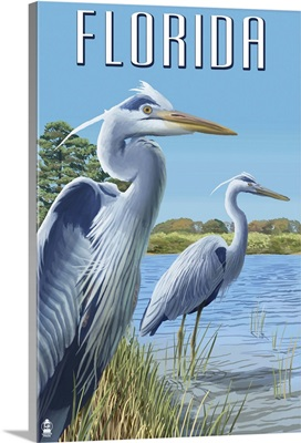 Blue Herons in Grass, Florida