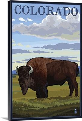 Colorado Buffalo Solo: Retro Travel Poster