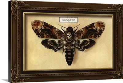 Death's Head Moth: Retro Art Poster