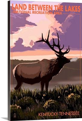 Elk, Land Between The Lakes, Kentucky-Tennessee