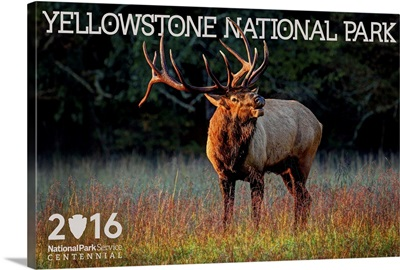 Elk, Yellowstone National Park, Wyoming