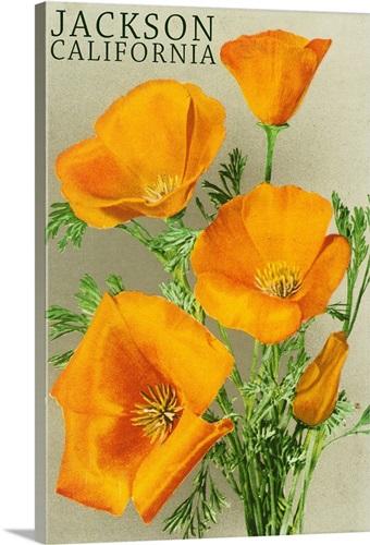 Jackson california poppy flowers wall art canvas prints framed jackson california poppy flowers mightylinksfo
