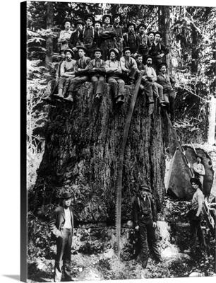 Lumberjacks prepairing Fir Tree for St. Louis World's Fair, Washington State