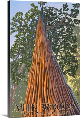 Muir Woods National Monument, California - Looking Up Tree: Retro Travel Poster