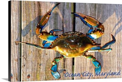 Ocean City, Maryland, Blue Crab on Dock