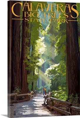 Pathway In Trees, Calaveras Big Trees State Park, California