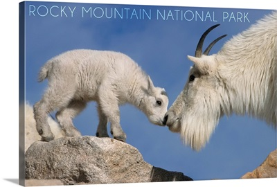 Rocky Mountain National Park, Colorado, Mountain Goat and Kid