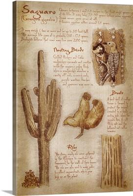 Saguaro Cactus, da Vinci Style