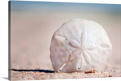 Sand Dollar on Beach
