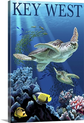 Sea Turtles, Key West, Florida