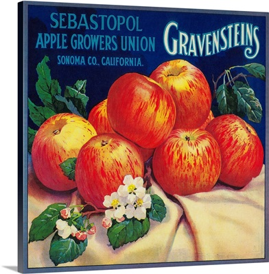 Sebastopol Gravensteins Apple Label, Sonoma, CA