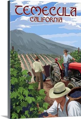 Temecula, California, Wine Grape Harvest